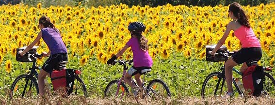 cyclesunflowers